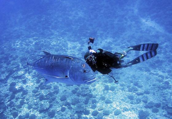 ラバーフィン Barracuda